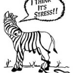 Zebra Stripes Unraveled