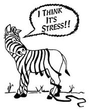 Zebra Stress