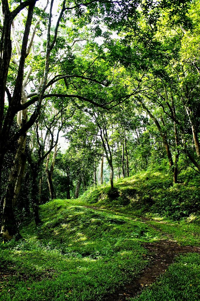 Lush mountain trail