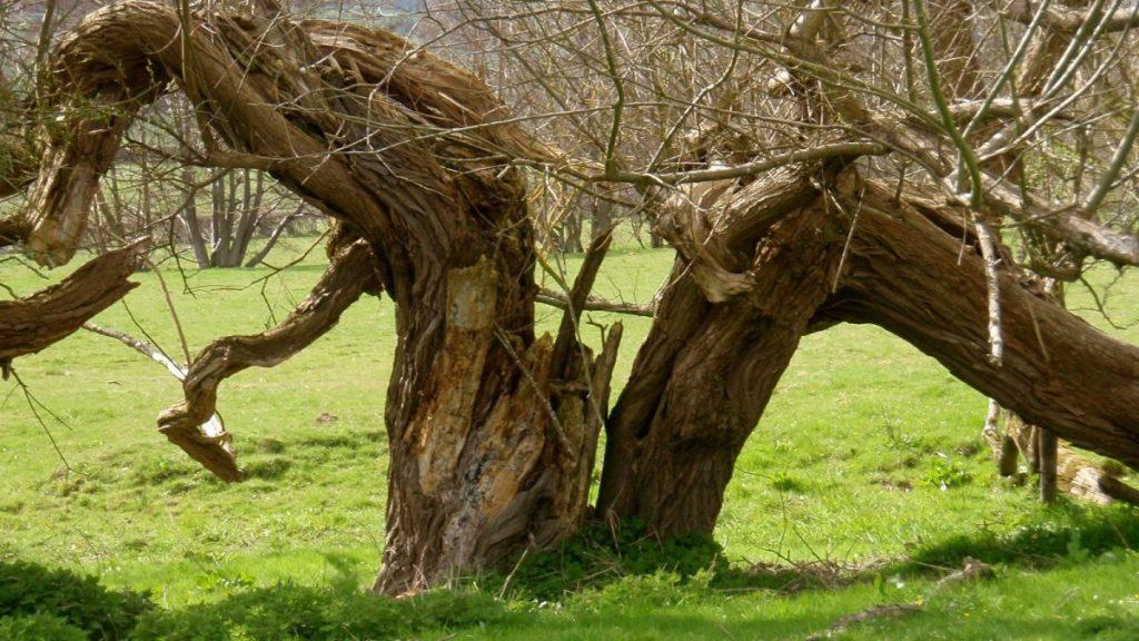 broken trees 1JPG